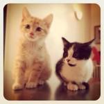 Cookie et Théo