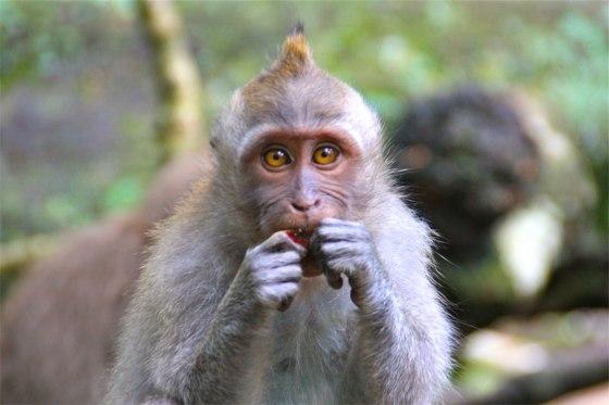 Monkey9