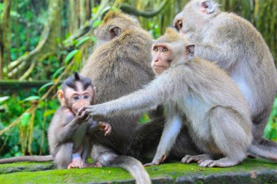 Monkey14