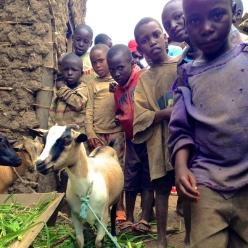 VSF Rwanda