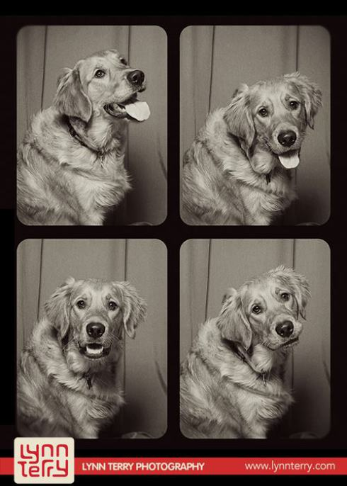 dogs-in-photo-booths-by-lynn-terry-9