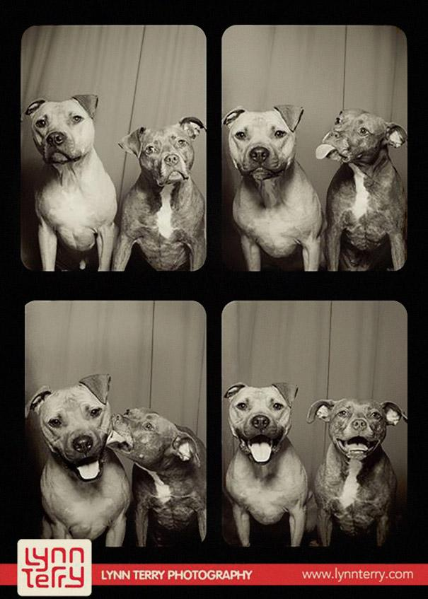 pit-bull-photo-booth-love-1