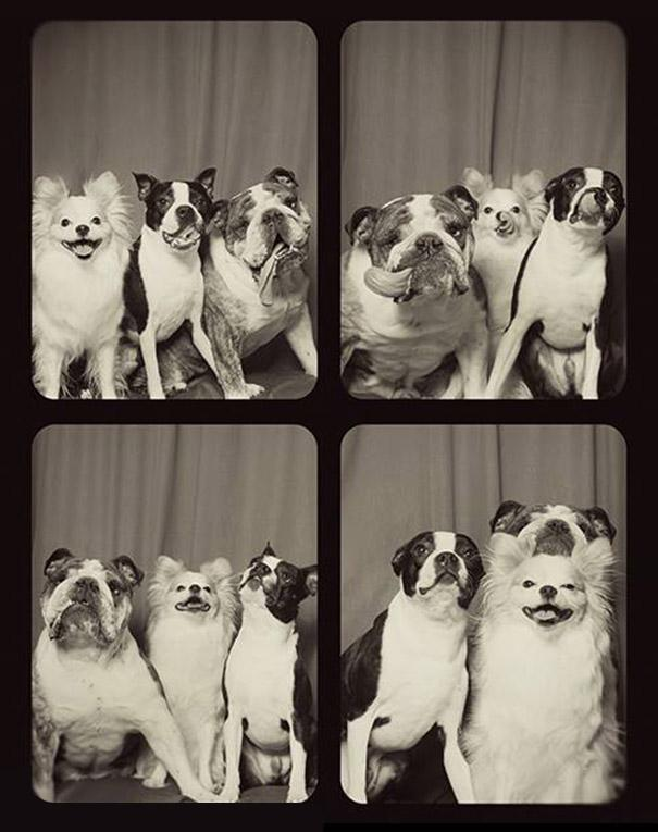 pit-bull-photo-booth-Lynn-Terry-5