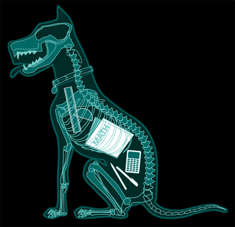 Xray-Dog