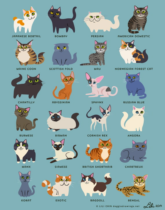 Cats!!