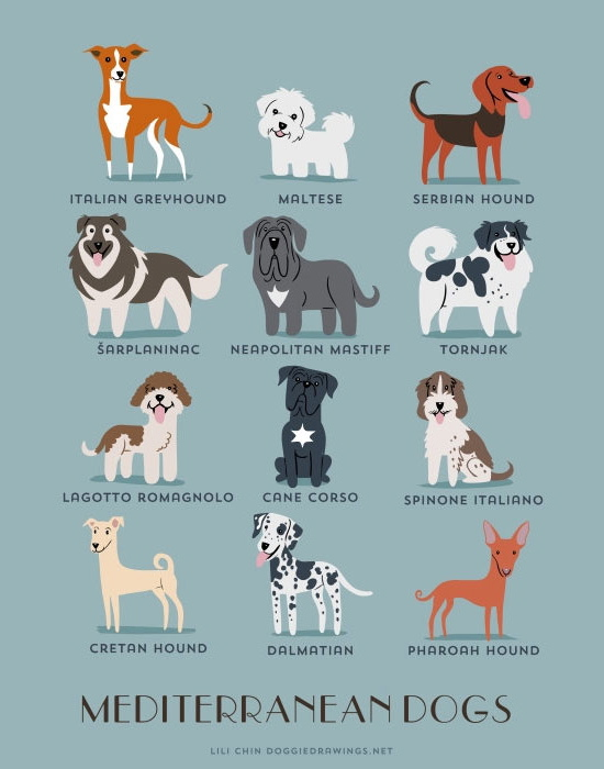 Mediteranean Dogs