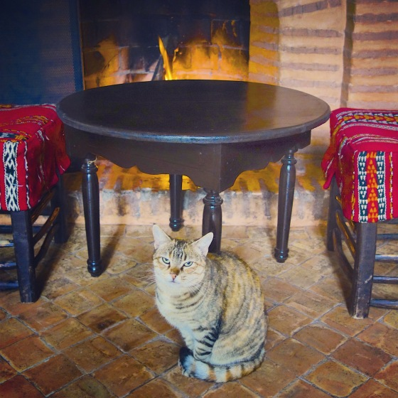 Chat Marrakech Majorelle feu