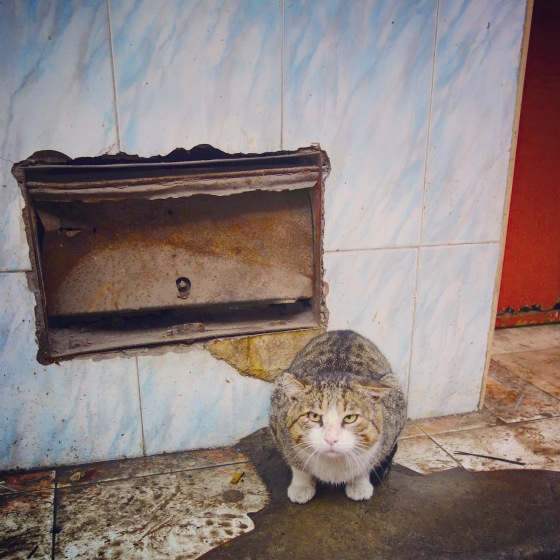 Chat Marrakech Matou