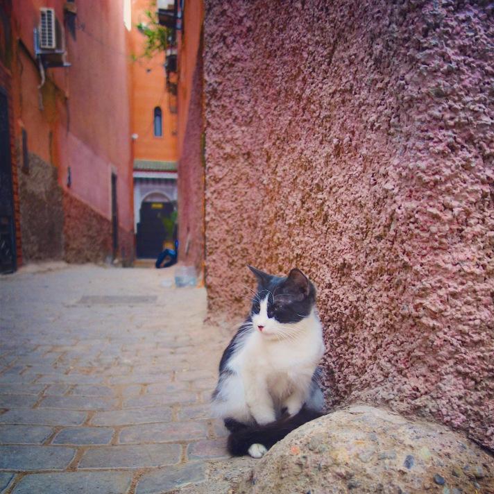 Chat Marrakech noir et blanc contre mur