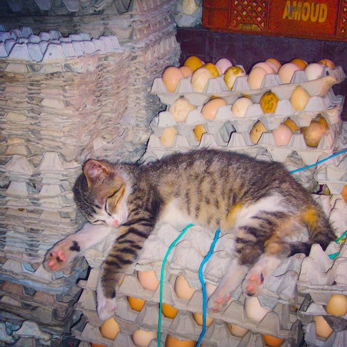 Chat Marrakech oeufs
