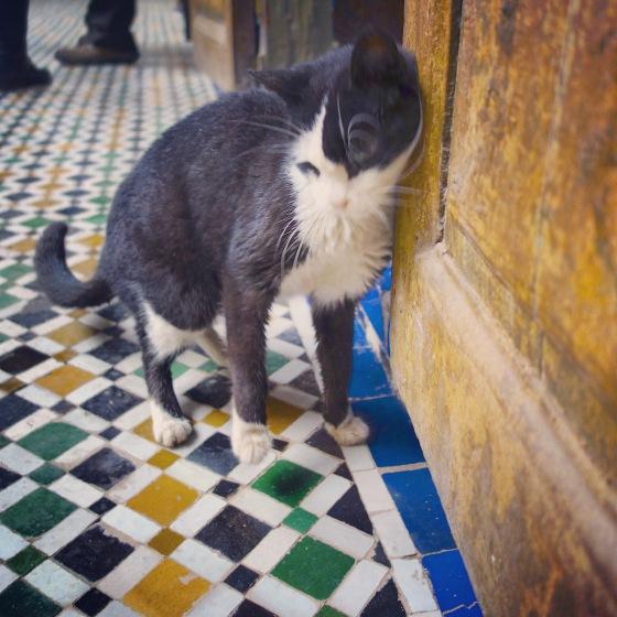 Chat Marrakech Palais noir et blanc 2