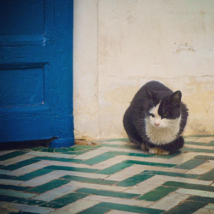 Chat Marrakech Palais noir et blanc 3