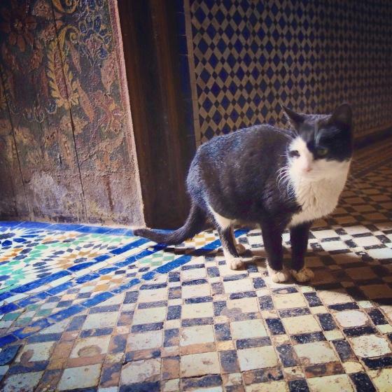 Chat Marrakech Palais noir et blanc 4