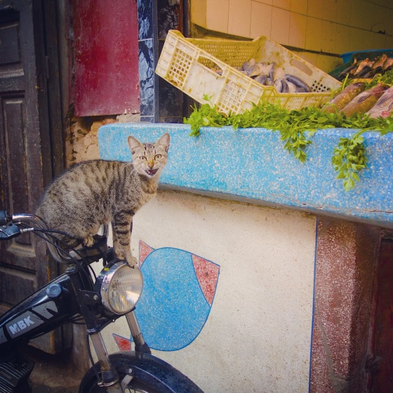 Chat Marrakech poisson 3