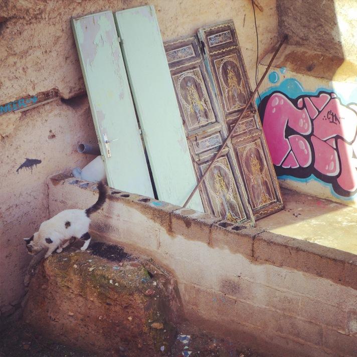 Chat Marrakech toits