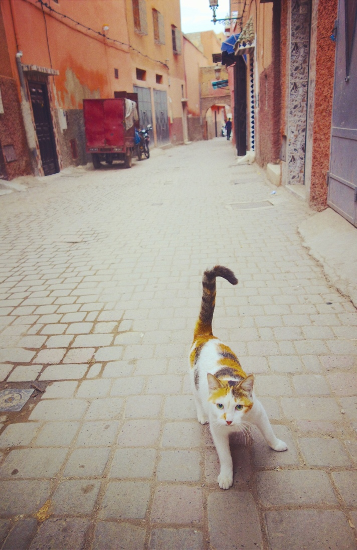 Chat Marrakech tricolore ruelle