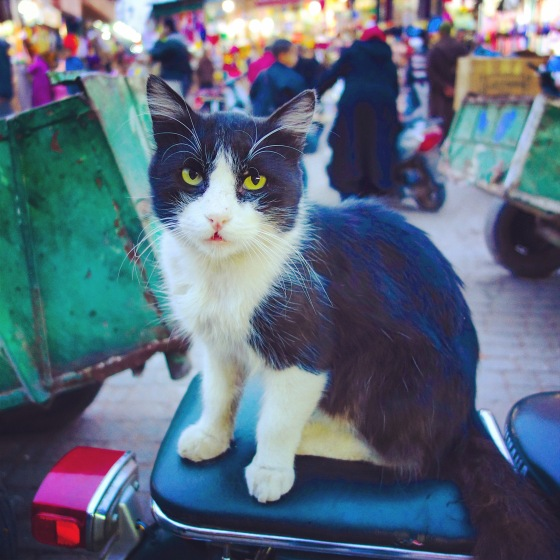 Chat Marrakech Yamaha 2