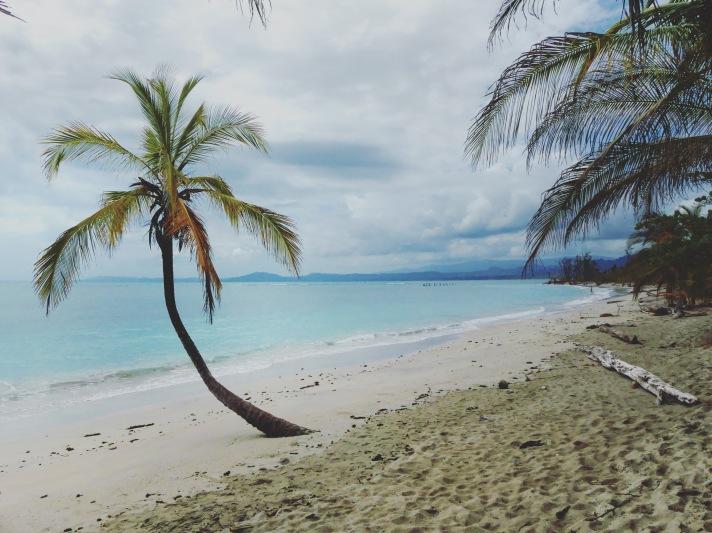 plage palmier